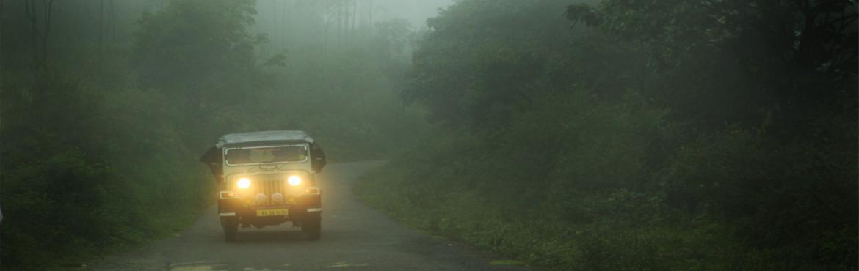 Wild Jungle Safari And Trekking At Pathanamthitta