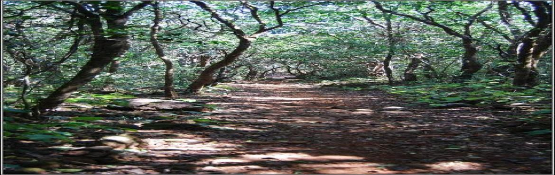 Walk in The Wilderness - Trek to Karnala