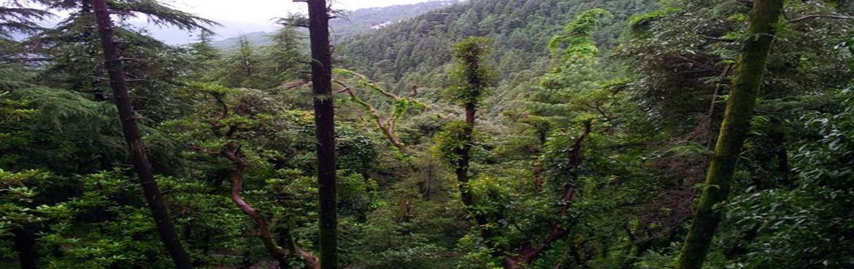 Triund Trek in Dharamshala