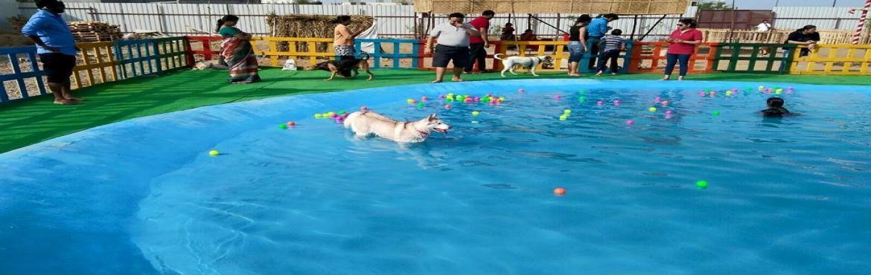 Dog Socialization Session in Pune