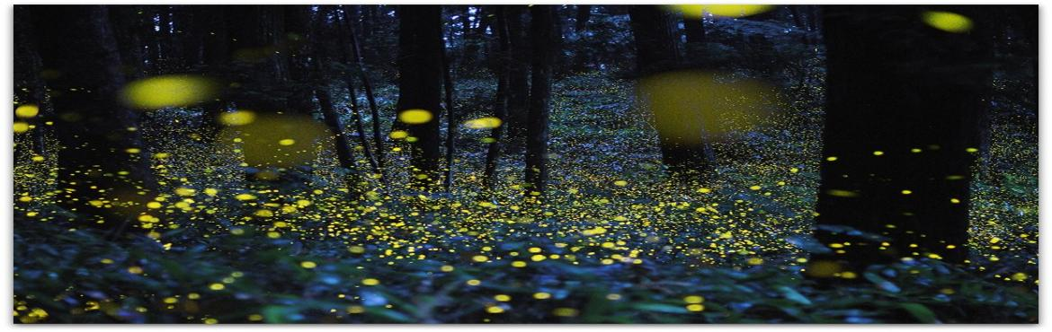 Book Online Tickets for Raw Fireflies Festival Batch 2, Pune. Raw Fireflies Festival - Batch 2Date : 18th June 2016Time : 1.30PM to 2.00AM(19th June)Place : Bhorgiri, BhimashankarHow to exploring the little world of Glowing Insects before the thundering rains wash them away. The opportunity to see them only for