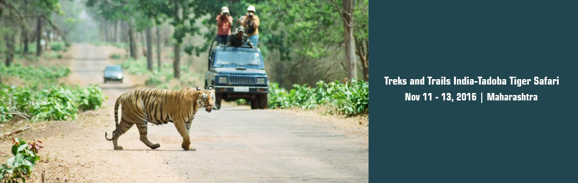 Treks and Trails India-Tadoba Tiger Safari November 11th-12th-13th 2016.