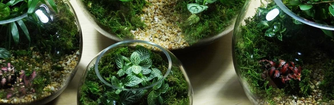 Book Online Tickets for Make Your Own Terrariums, Mumbai. Urban Firefly announces its \'Make your own Terrarium\' workshop! Terrariums are gorgeous looking mini ecosystem for living plants. You will learn the A-Z of making and maintaining your own terrariums.    You will take home: