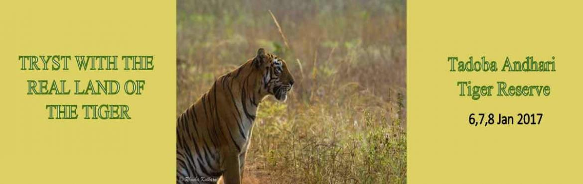 Book Online Tickets for TigerLand Tadoba with jungLEADz, Chandigarh. A 3 day 2 night escape to the Jewel of Vidarbha i.e. Tigerland of Tadoba with all inclusions ex-Nagpur.