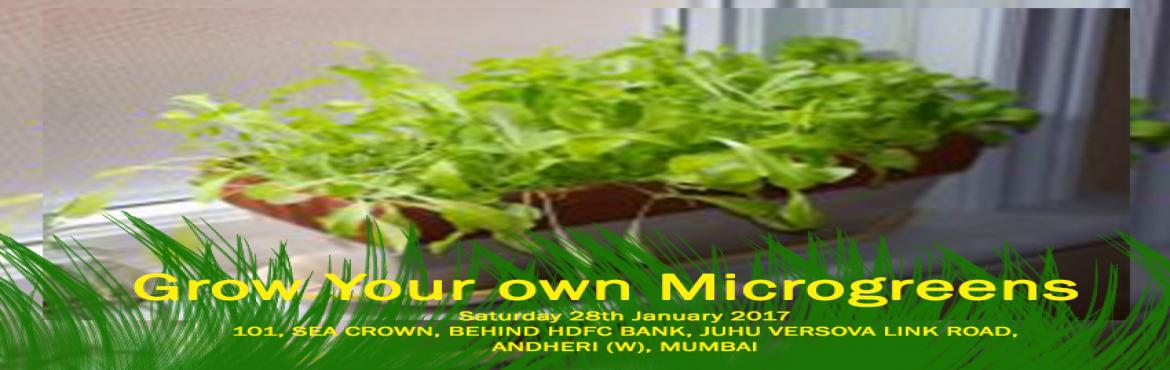 Book Online Tickets for Grow Your own Microgreens, Mumbai. Microgreens are an excellent source of vitamins and proteins and can be easily grown indoors. Learn how to grow delicious gourmet style microgreens in a variety of flavours and colours with Savio Souza from The Green Education Organization (GEO). Tru