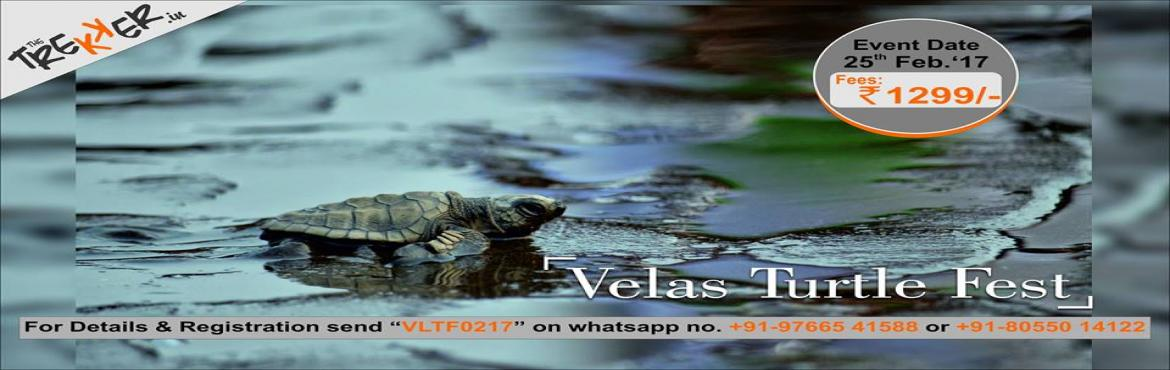 Velas Turtle Fest - 24-25th Feb 2017, Pune-Velas-Harihareshwar-Pune