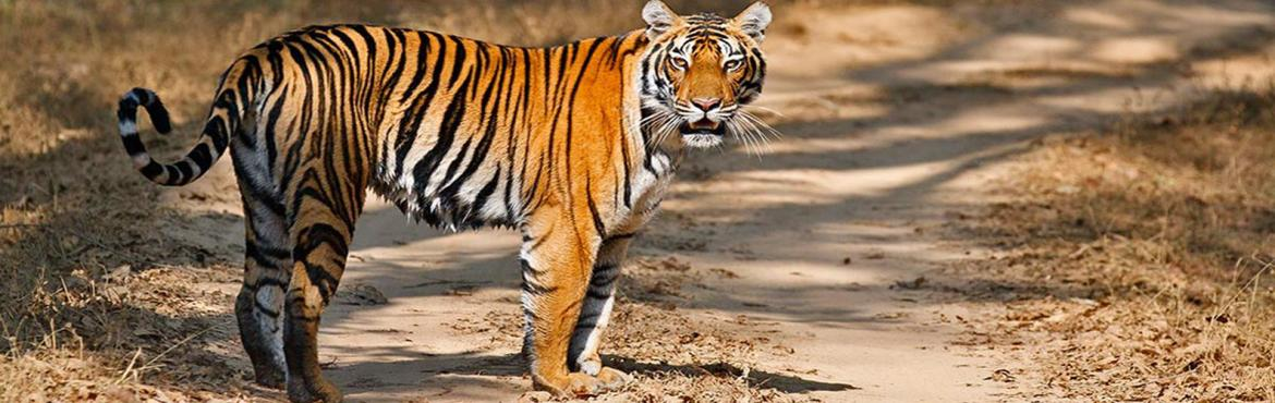 Book Online Tickets for TADOBA WILDLIFE TOUR, Pune. TADOBA WILDLIFE TOUR Tadoba National Park is situated in Chandrapur district. Often called the 'Jewel of Vidarbha', it is the largest national park in the state of Maharashtra. Overview: Tadoba is the most popular tiger reserve in Ma