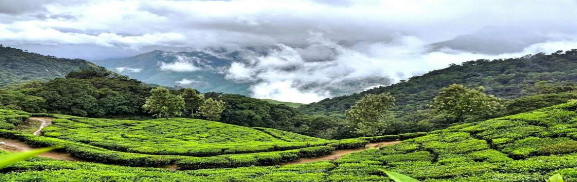 Wilderness Trek to Top Station - Munnar