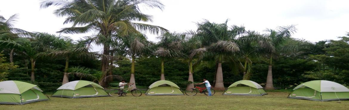Monsoon Camping in Chikoo Orchard