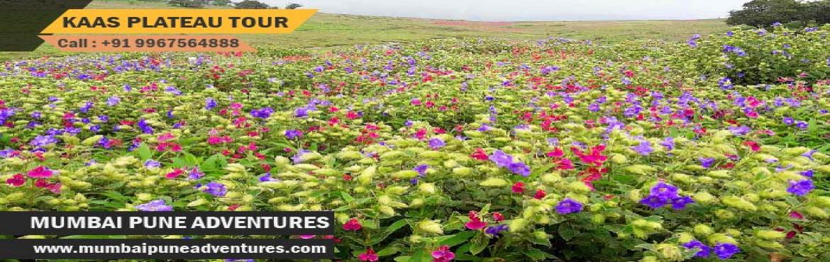 Book Online Tickets for Kaas Plateau Tour-Mumbai Pune Adventures, Mumbai.   Event Details:Event Grade: EasyEndurance Level: EasyHeight of plateau: 3900 ft approx.Location: SataraDuration: 1 Night 1 DayCost: Rs. 1,850/-About Kaas Plateau:The Kaas Plateau, also known as the Kaas Pathar or Kas Sadas, is a plateau situated 25