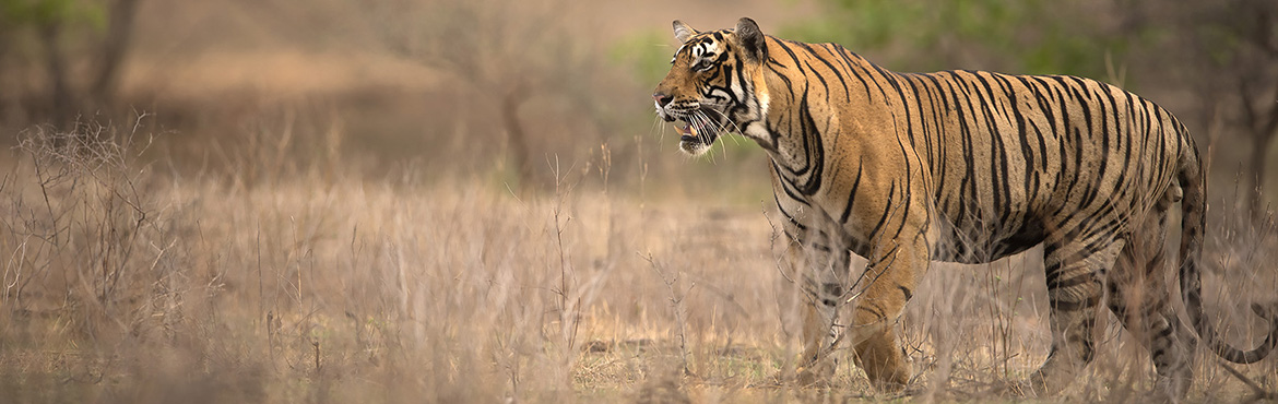 Ranthambhore Photography Tour by Wild Voyager