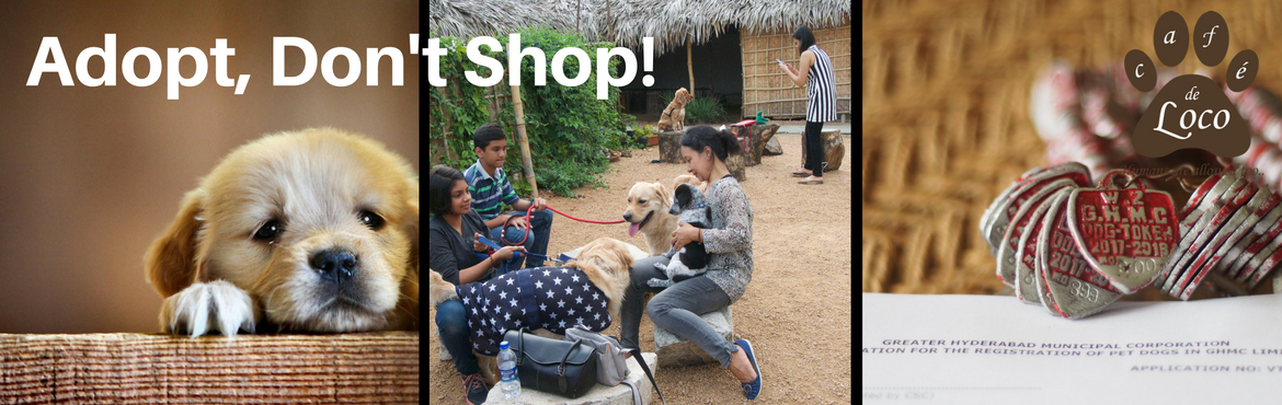Book Online Tickets for pet adoption drive, Hyderabad. Strictly No breeders allowedBring a valid identity proof for adoptionIf getting a dog, he/she must be vaccinated and min 40 days old Cafe de Loco will provide the platfrom for vlunteers to get their pups for adoption and the propective pet parents to