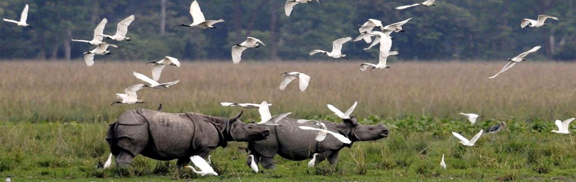 Book Online Tickets for KAZIRANGA WILDLIFE TOUR, Pune. Overview: Kaziranga-wildlife-tour Moore high up in the mountain ranges of the Himalayas, at 3500 meters above sea level is Tawang-the beautiful land of Monpas. Bordered by Tibet in the north, Bhutan is in the Southwest and Sela ranges. The name Tawan