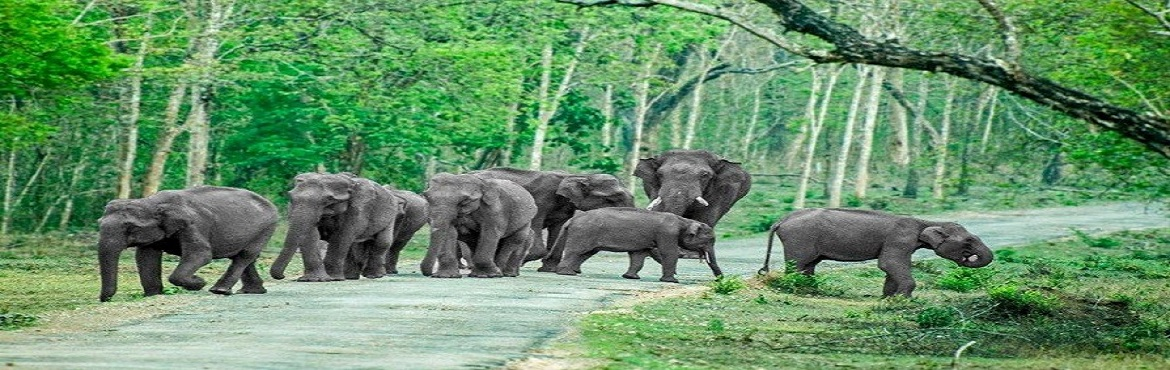 Book Online Tickets for bandipur trek, bandipura.  The Bandipur National Park is located in the Bangalore Chamarajanagar district and is one of the countrys most known sanctuaries, protecting wildlife and highlighting the wonders of untainted nature. Various trekking opportunities exist in the