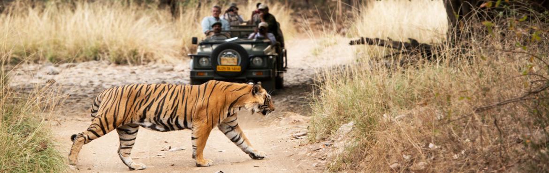 Sawai Madhopur - Ranathambore Trip