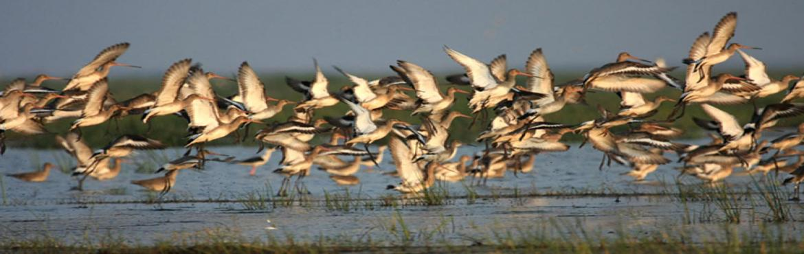 Birding and Nature Tour to Chilika Lake