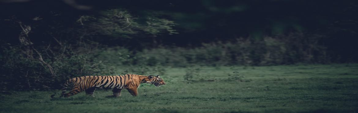 Book Online Tickets for Exclusive Wildlife Photography and Light, Bengaluru.  Learn Wildlife Photography | Enter the Awesome world of Wildlife    How to Start Wildlife Photography?  Types of Photography Know your Photography Kit Buying a Camera     Basics of Wildlife Photography  Know your Camera and Lens Learn
