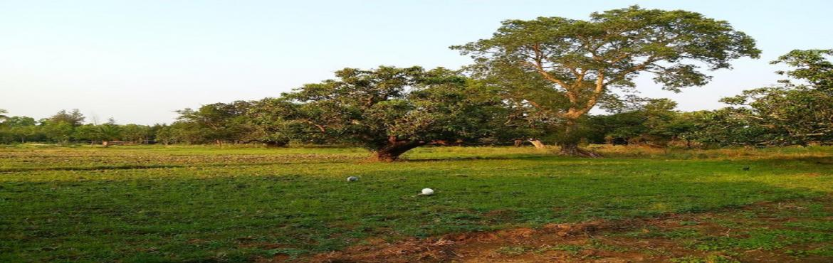 Book Online Tickets for Organic Farm Tour, Malavalli. Join us as we take you on an exciting tour of an organic farm along Kanakapura highway. This farm which is about 20 acres in size has about 120 different types of Mangoes on it & the farmer who runs it is doing research on indigenous varieties of
