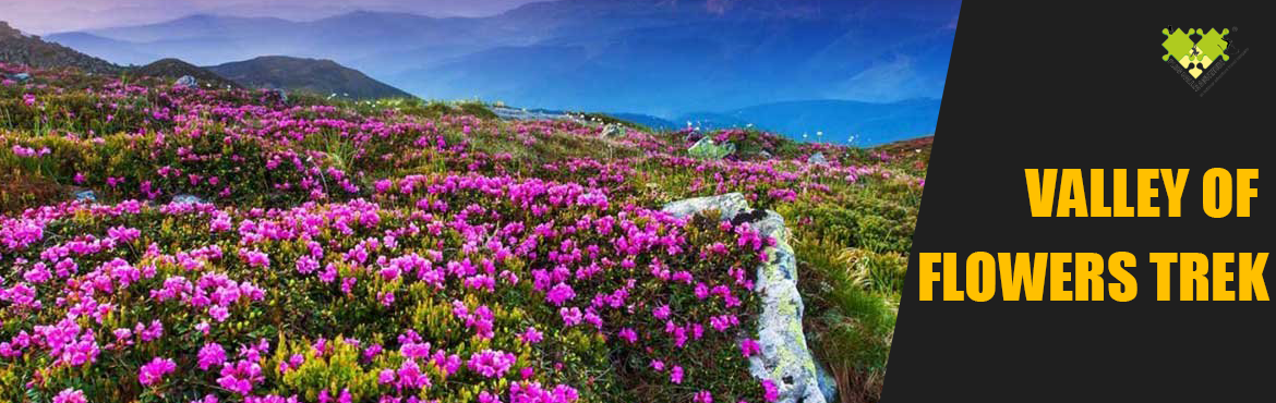 Book Online Tickets for Valley of Flowers Trek by Plus valley Ad, Haridwar. The most beautiful of all Himalayan flowers, the blue Primula can be seen blooming in thousands in the valley. The best time to see the Valley Of Flowers in full bloom is from mid-July to mid-August. To reach the valley one has to trek from Govind Gh