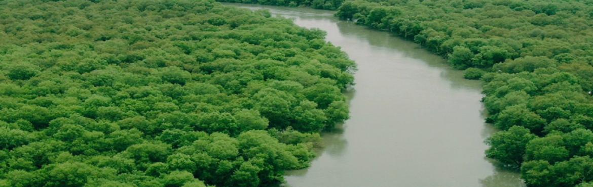 Book Online Tickets for Nature Trail at Godrej Mangroves, Mumbai. Mangroves are tree/ shrub species that livealong shores, rivers, and estuaries.They live in water up to 100 times saltier than most other plants can tolerate. In Mumbai, mangroves are found on both east and west coast - in are