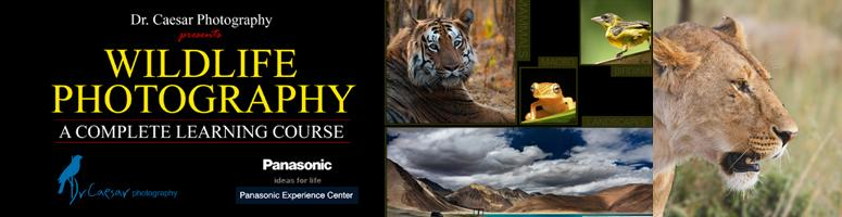 Wildlife Photography complete learning course