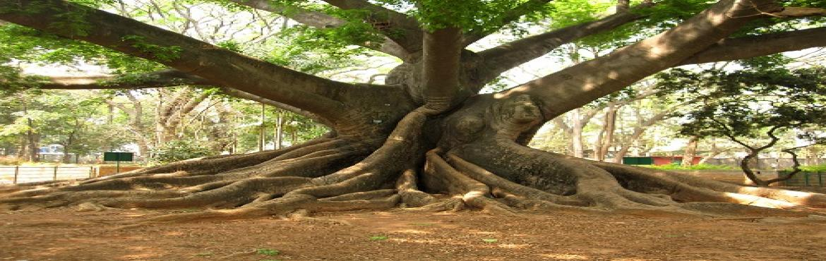 Book Online Tickets for Lalbagh eco walk., Bengaluru. Take a walk with a landscape architect & know more about the amazing trees inside Lalbagh.\