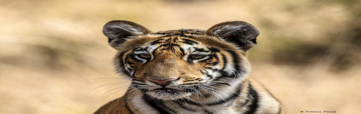 Book Online Tickets for Ranthambore Jungle Safari with naturalis, Sawai Madh.   Ranthambore National Park is one of the most eminent wild life parks in India. A former hunting ground of the Maharajas of Jaipur, the park is now commonly known for its large tiger population and is the prime example of project tiger's