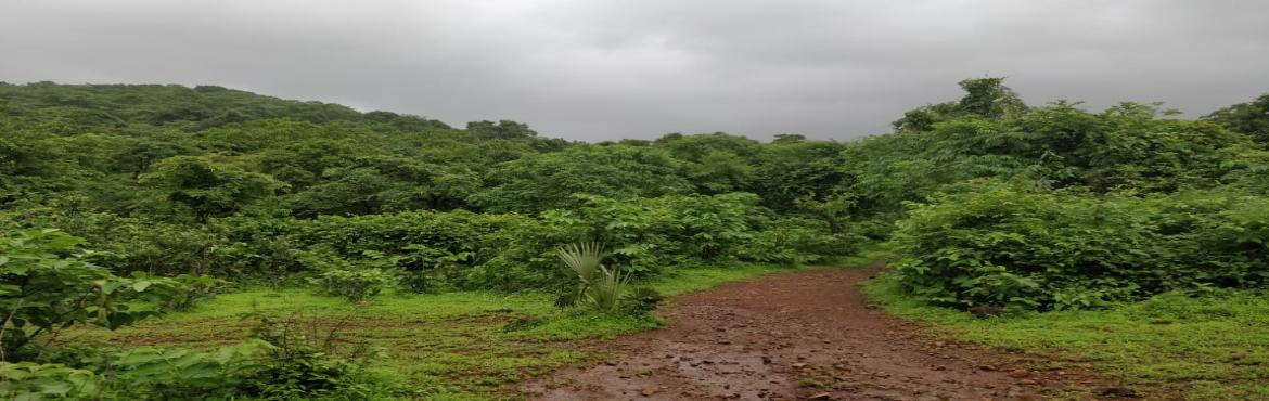 Book Online Tickets for Beginners Trail at Sanjay Gandhi Nationa, Mumbai. A short and beautiful Trail which suits all ages. It is one of the best trail to initiate your child into the charms of the forest.  The walk is  on flat terrain and ends at a flowing stream. On this trail the naturalist will talk about the inte