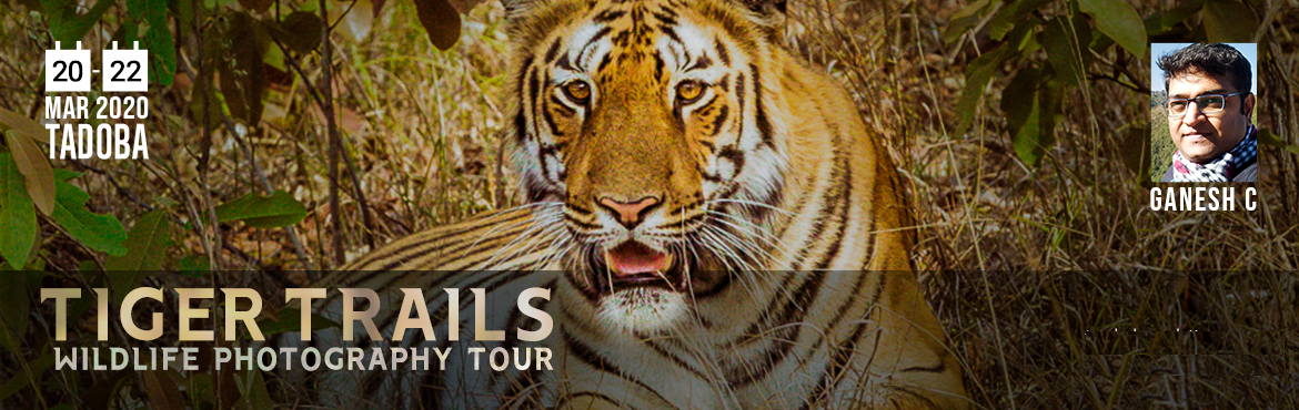 Book Online Tickets for TADOBA WILDLIFE PHOTOGRAPHY TOUR, Chandrapur. Notably Maharashtra\'s oldest and largest National Park, the \