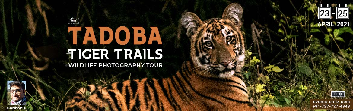 Book Online Tickets for TADOBA WILDLIFE TOUR, Chandrapur. Notably, Maharashtra\'s oldest and largest National Park, the \