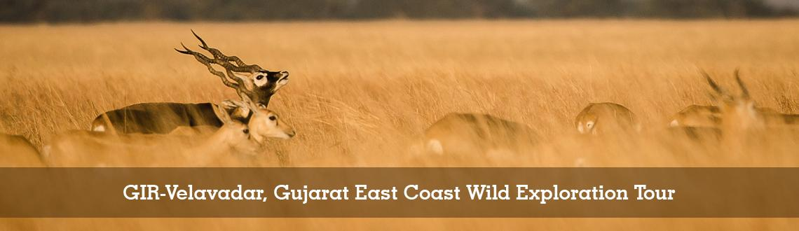 GIR-Velavadar, Gujarat East Coast Wild Exploration Tour