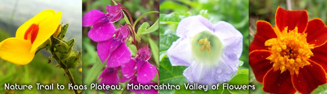 Nature Trail to Kaas Plateau, Maharashtra Valley of Flowers
