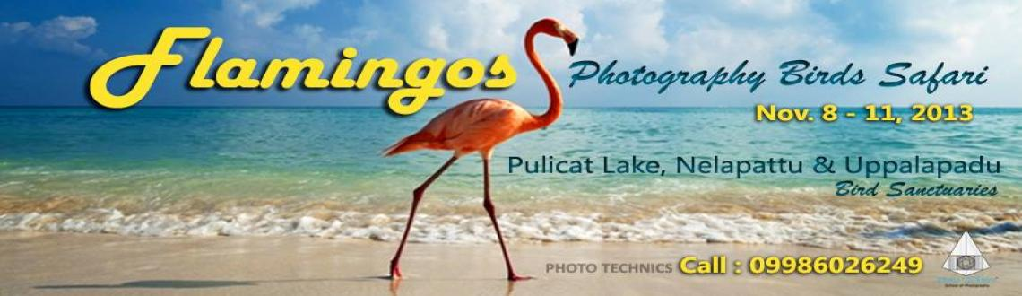 Book Online Tickets for flamingos Photography Birds Safari, Bengaluru. Flamingos Photography Birds Safari Nov. 8 – 11, 2013  Pulicat Lake - Nelapattu - Uppalapadu Bird Sanctuaries  A group of Wildlife Photographers are making a photo tour to the well known Flamingos bird sanctuary at Pulicat Lake. We wil