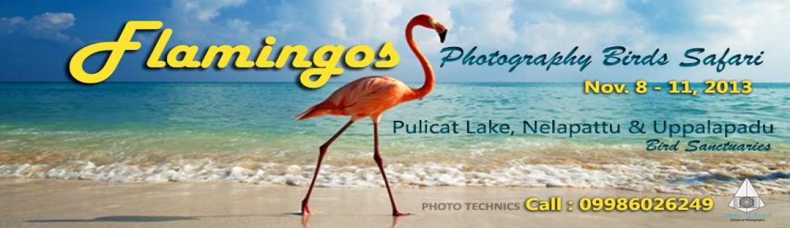 flamingos Photography Birds Safari