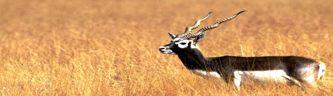 REHEKURI Black Buck Sanctuary Photography Tour on 24-May