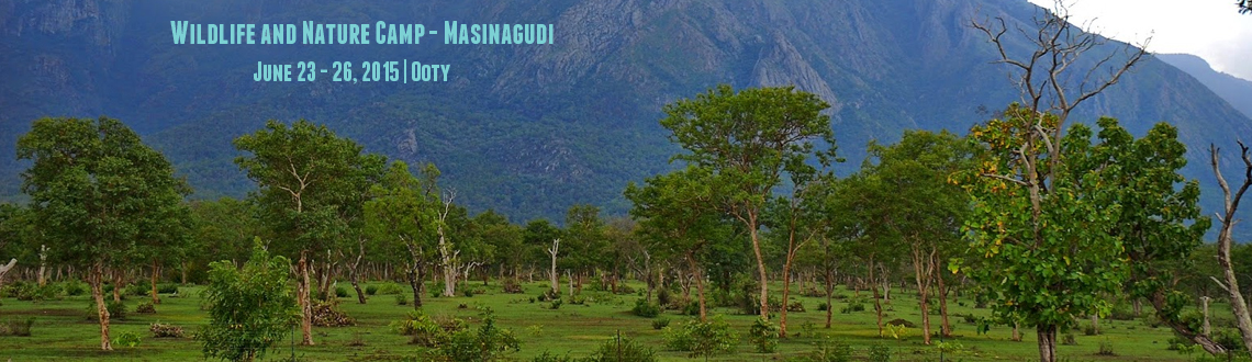 Wildlife and Nature Camp - Masinagudi
