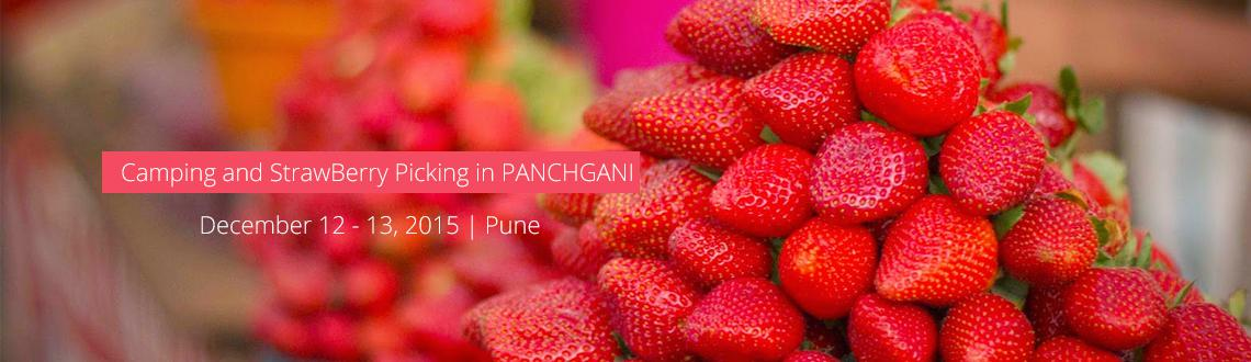 Camping and StrawBerry Picking in PANCHGANI