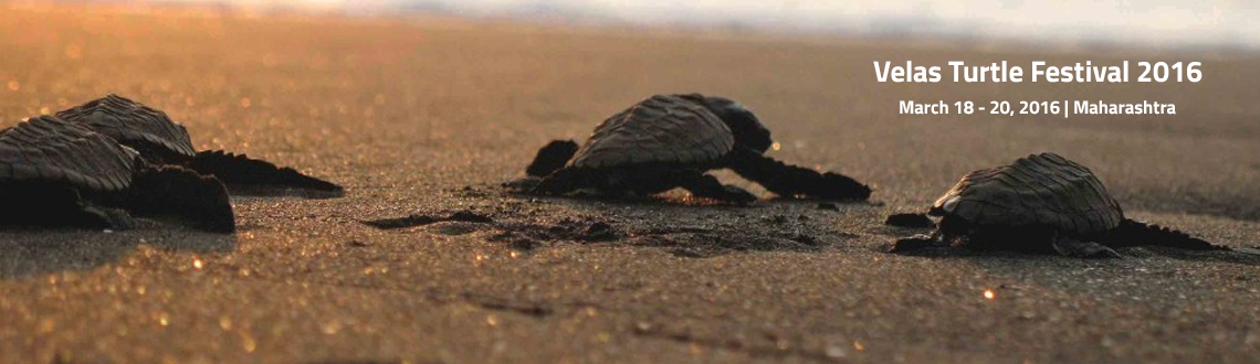 Book Online Tickets for Velas Turtle Festival 2016, Velas. Information About Turtle Festival at Velas:-The Turtle Festival at Velas is annually organized by Sahyadri Nisarga Mitra (SNM) and the Kasav Mitra Mandal (KMM), during the period of February to March. This festival is attended by nature lovers, marin