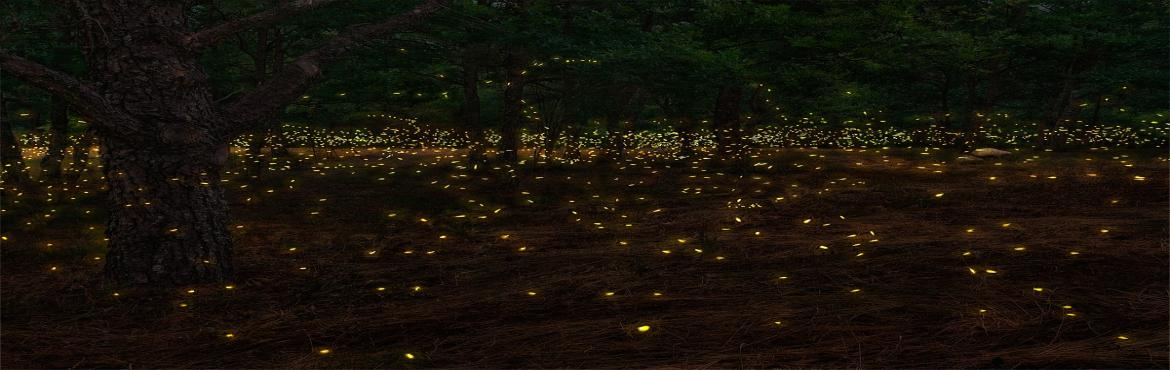 FireFlies Trek at Rajmachi