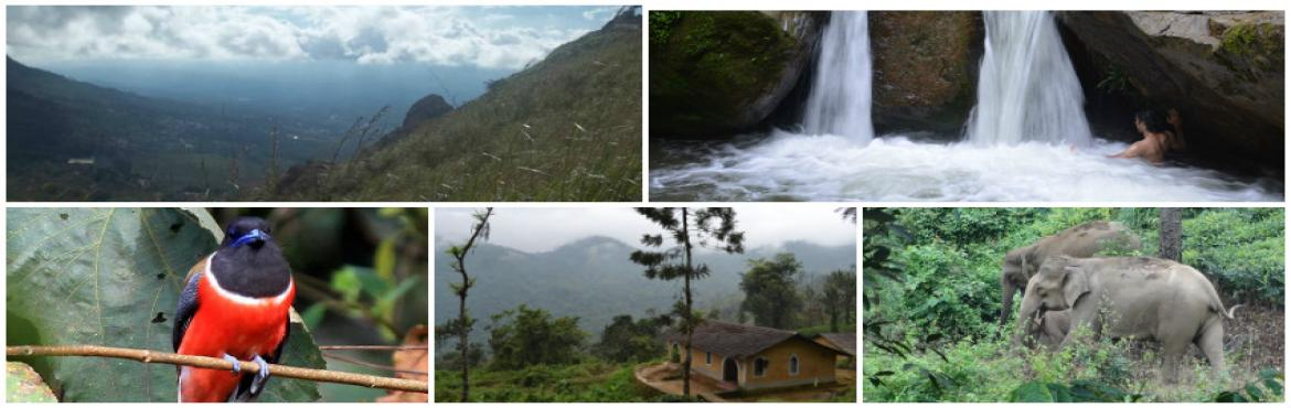 Book Online Tickets for An Adventure of a Lifetime: Explore the , Gudalur. Explore the unmatched experience of a thick rain-forest in the Blue Mountains.   Indulge your visual senses with the charming scenery of the atmosphere rich in fauna & flora and get to experience the tranquil lifestyle of the local trib