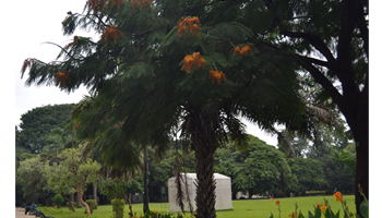 Lalbagh Nature Walk for Kids