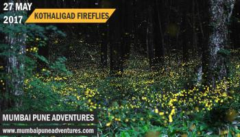 Fireflies Kothaligad Trek-Mumbai Pune Adventures-27 May 2017