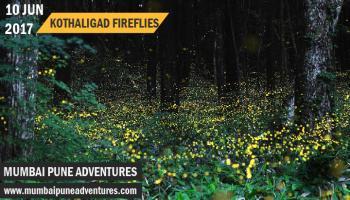 Fireflies Kothaligad Trek-Mumbai Pune Adventures-10 June 2017