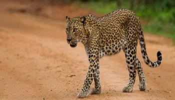 Kanha Wildlife Safari