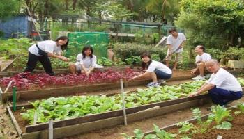 Volunteer at our Farm