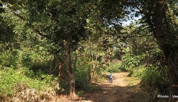 Jungle Retreat with authentic Tribals meals  With Nature Walk