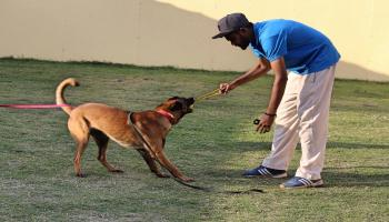 Pet Keeping and Behaviour Seminar by Adnan Khan (K9 School India) followed by Pool party