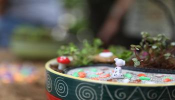 DIY Miniature Gardening Workshop, Jaipur