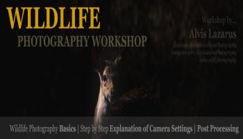 Exclusive Wildlife Photography and Lightroom Post Processing Workshop