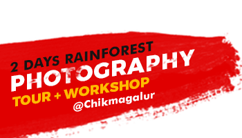 2 days Rainforest Photography Tour+Workshop at Chikmagalur